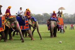 Elephant Polo Royalty Free Stock Photography