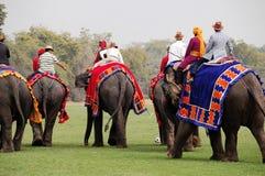 Elephant Polo Stock Image