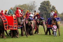 Elephant Polo Stock Photo