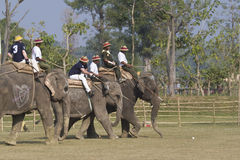 Free Elephant Polo In Nepal Stock Photos - 43156673