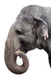 Elephant Portrait Stock Photography