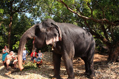 Elephant Posing For Tourists Stock Photography