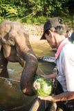 Elephant& x27; prima colazione di s Immagini Stock Libere da Diritti
