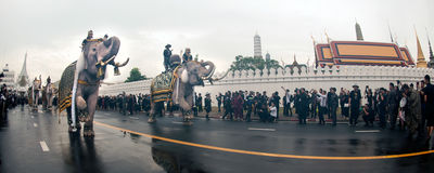 Elephant procession honours late King. Bangkok, Thailand -November 8,2016 : Eleven Elephants to look like white prostrate ,ascribe unto lamented. His Majesty royalty free stock images