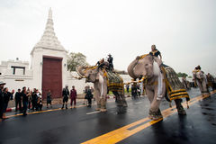 Elephant procession honours late King. Bangkok, Thailand -November 8,2016 : Eleven Elephants to look like white prostrate ,ascribe unto lamented. His Majesty stock photo