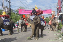 Elephant procession Royalty Free Stock Image