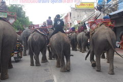 Elephant procession Royalty Free Stock Photos