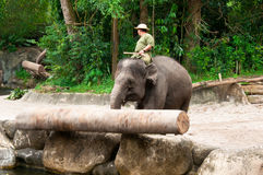 Elephant Pushing Log Royalty Free Stock Photo