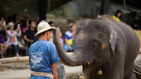 Elephant putting hat on tamer head Royalty Free Stock Photos