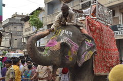 Elephant at Rathyatra, Ahmedabad royalty free stock photos
