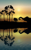 Elephant Reflection. Illustration of two elephants playing at sunrise Stock Images