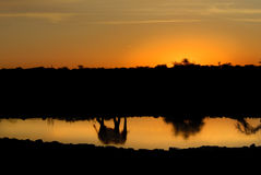 Elephant reflection at sunset. Scenic view of beautiful sunset reflecting elephant on water, African scene Stock Image
