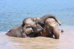 Elephant relationship Royalty Free Stock Photography