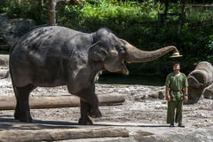 An elephant removes the hat from a mahout during the elephant show at the Singapore Zoo in Singapore. stock photography
