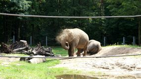 Elephant rescued from the heat. Elephant zoo animal nature animals Stock Photo