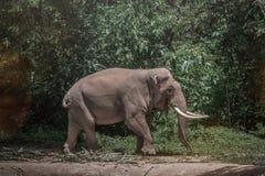 Elephant at the reservoir stock photos