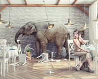 Elephant  in  restaurant. The elephant calm in a restaurant interior. photo combination concept Royalty Free Stock Photo