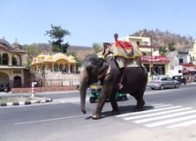 An elephant ridden by its mahout at outskirt of Jaipur Rajasthan India Royalty Free Stock Images