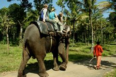 Elephant ride Stock Photography