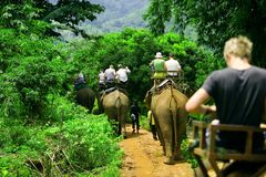 Elephant ride. Tourist group rides through the jungle on the backs of elephants Royalty Free Stock Images