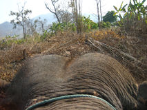 Elephant ride. View of jungle from on top of an elephant Royalty Free Stock Photography
