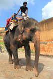 Elephant Ride in the Amber Fort. Royalty Free Stock Photo