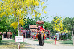 Elephant ride in Ayudhaya, Thailand Stock Photography