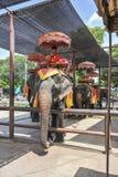 Elephant ride Royalty Free Stock Image