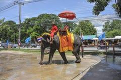 Elephant ride Stock Image