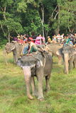 Elephant Ride in chitwan national park. Stock Photos