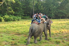 Elephant Ride in chitwan national park in nepal Stock Photos