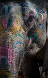 Elephant ride. A close up shot of an elephant with painted face showing the details of the skin Royalty Free Stock Photos