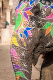 Elephant Ride. A close up shot of an elephant with paintings all around its face and trunk during an elephant ride in Amber Fort in Jaipur, India Stock Images