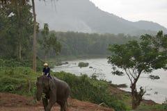 Free Elephant Ride In Laos On November, 2013 Stock Photo - 38642190
