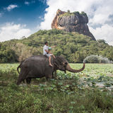 Elephant ride Royalty Free Stock Photography