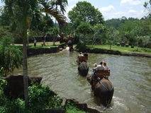 Elephant ride through pond in Bali, Indonesia Royalty Free Stock Image