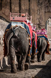 Elephant ride. A shot of elephants decorated with colorful fabric and body paintings with seating areas on their backs as one of the attractions in Amber Palace Stock Image