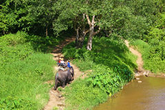Elephant ride in thai forest Royalty Free Stock Photos