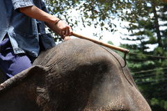 Elephant ride in Thailand. The rider shows the way to the elephant with a special training stick Royalty Free Stock Photos