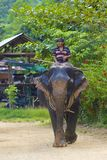Elephant ride in Thailand Royalty Free Stock Photography