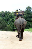 Elephant Ride. In Thailand on the road Stock Photo