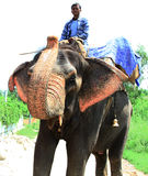 Elephant rider Stock Photography