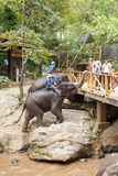 Elephant and rider Stock Images