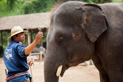 Elephant and rider Stock Photography