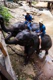 Elephant and rider Royalty Free Stock Image