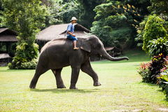 Elephant and rider Stock Image