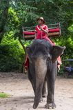 Elephant rider in Cambodia. SIEM REAP , CAMBODIA - OCT 15 : Cambodian man riding an Elephant at the Angkor Thom in Siem Reap Cambodia on October 15 2017 , Angkor Royalty Free Stock Image