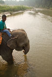 Elephant and rider, Chitwan National Park, Chitwan, Nepal Stock Photo