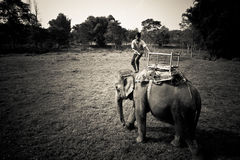 Elephant and rider, Chitwan National Park, Chitwan, Nepal Royalty Free Stock Photo