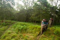 Elephant and riders, Chitwan National Park, Chitwan, Nepal Royalty Free Stock Images